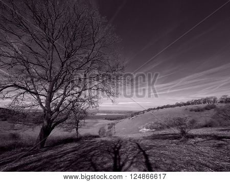 Countryside black and white landscape wide angle with purple retro tint