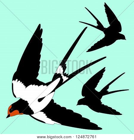 Swallow black silhouette isolated vector illustration bird fly