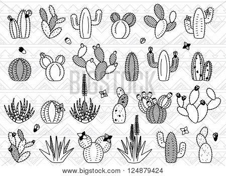 Vector Set of Doodle Cactus and Succulent Plants
