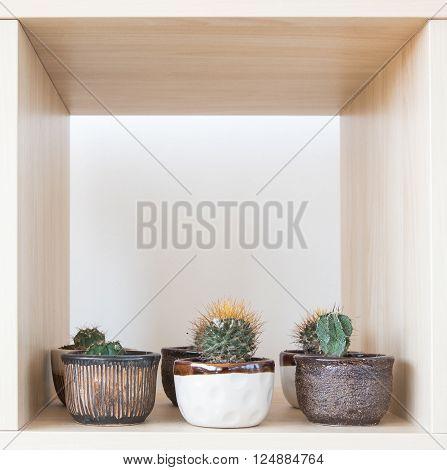 Cactus Planting In Pot