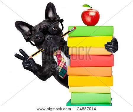 french bulldog  dog behind a stack of books very clever , smart but with dumb nerd glasses, isolated on white background poster