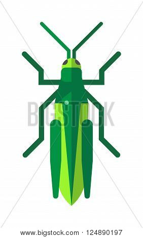Nature grasshopper, green cartoon locust and cute flat grasshopper. Wild creature antenna invertebrate locust. Cute grasshopper cartoon agricultural zoo large green locust nature insect flat vector.