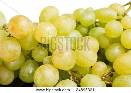 Big bunch of fresh ripe sweet grapes close up on white background.