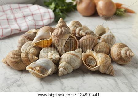 Fresh cleaned raw common whelks ready to cook