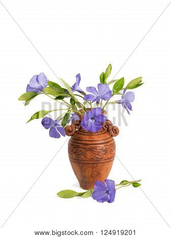 closeup bouquet of Lesser periwinkle (Vinca minor) in the clay pitcher isolated on white