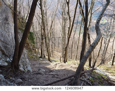 Approach Trail To Rock Climbing Cliff In Kotecnik Slovenia