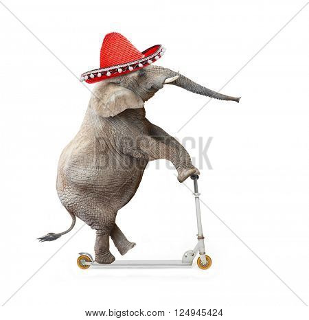 Crazy elephant with sombrero driving a push scooter. Republican elephant going to elections. Digital artwork on political theme.