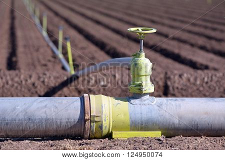 Irrigation pipe and sprinklers watering a newly planted field.