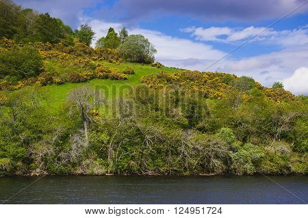 Nature in Loch Ness in Scotland. Loch Ness is a city in the Highlands in Scotland in the United Kingdom.