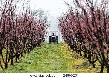 Farmer With Tractor Using A Air Blast Sprayer