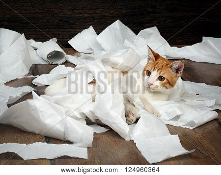 Funny kitten playing with the toilet paper on the floor. Kitten small, fur is white with red. Paper crumpled, torn