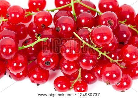 fresh ripe currant photographed closeup isolated on a white background. ** Note: Shallow depth of field
