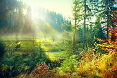 Autumn Nature scene. Beautiful morning Misty Old Forest and meadow with Sun Rays, Shadows and Fog. Forest, Park, Countryside  poster