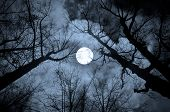 Night mysterious landscape in cold tones - silhouettes of the bare tree branches against the full moon and dramatic cloudy night sky poster