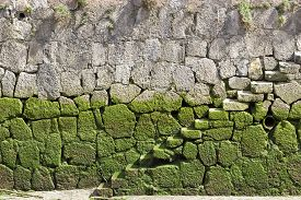 Background image of the beginning of a stone stair covered with green mud.