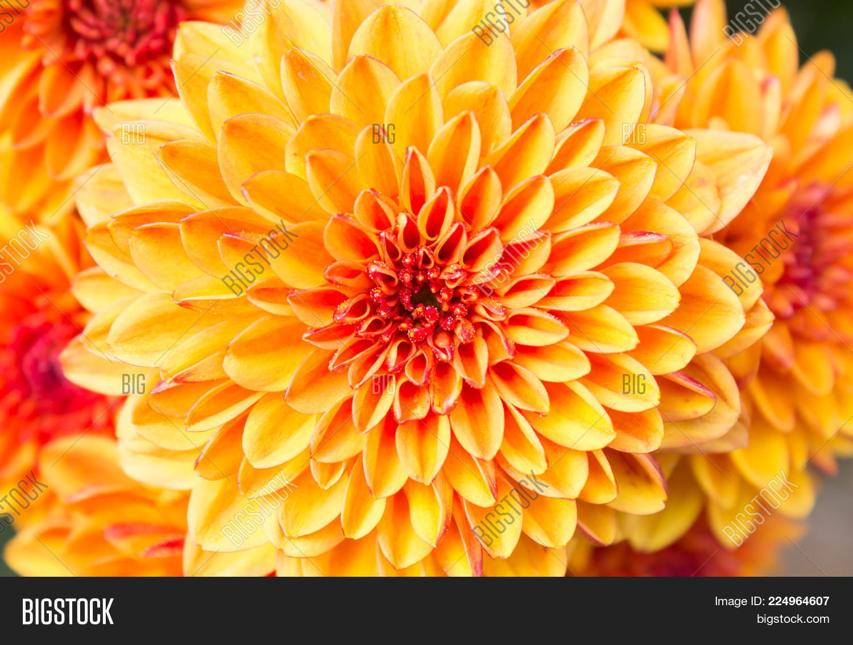 Ligth Orange Yellow Image Photo Free Trial Bigstock