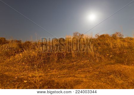 dry grass in a field in the moonlight night .