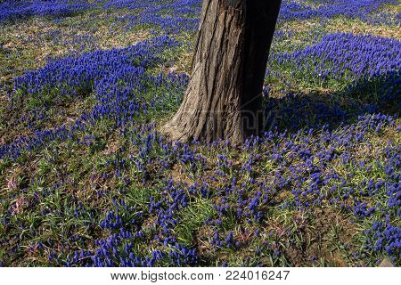 Part of a tree and flowers as a natural background texture