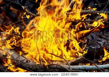 burning of thin dry grass during incendiary fire, close-up fire dry grass burning branches forest burns