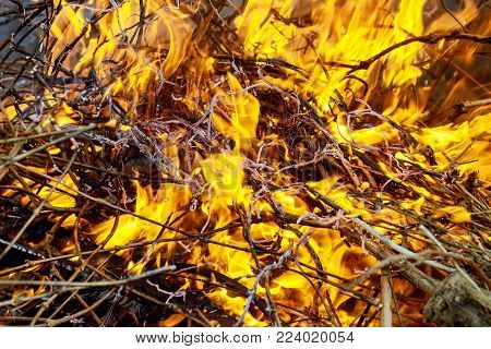 Burn waste fire flame and smoke. Global warming concept fire dry grass burning branches forest burns
