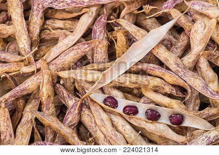 closeup of speckled haricot beans and pods