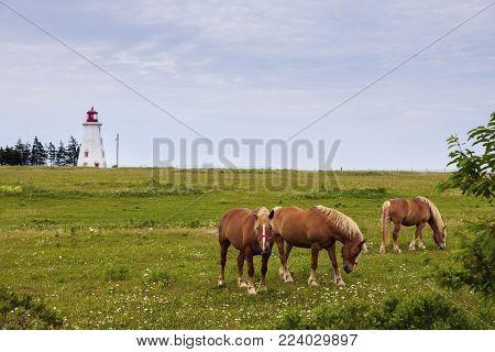 Panmure Head Lighthouse On Prince Edward Island. Prince Edward Island, Canada.
