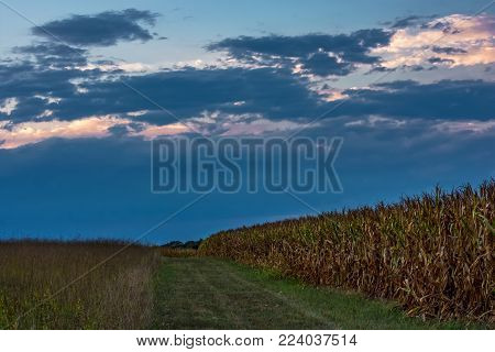 Early evening light along this path through the cornfield of Monmouth Battlefield Park in Freehold New Jersey.