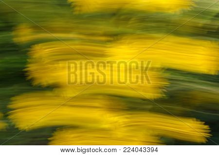 Abstract texture and background. Blurred photo of flowers with movement and streak effect in yellow and green  colors. Fast movement shutter.  Directional blur, motion effect