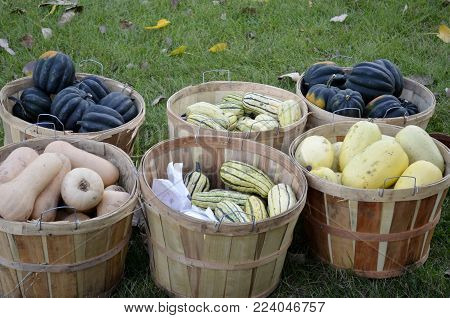 A variety of squash food sorted into baskets and displayed for sale at a local outdoor farmers market