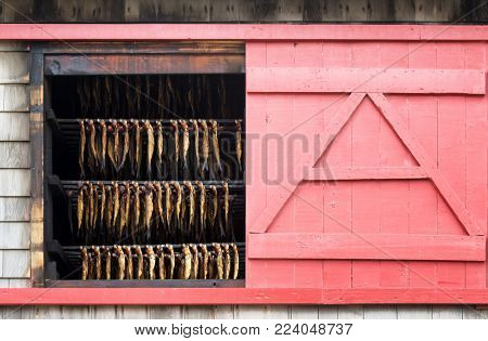 Herring hanging in a smokehouse on Havre Aux Maisons, Iles de la Madeleine, Canada. Exterior of the building showing the rows of fish through a window with pink sliding shutters.
