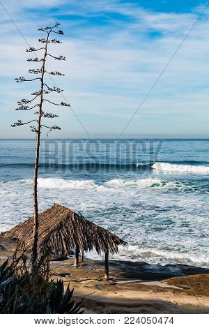 A tree towers over the iconic surfer shack at Windansea Beach in La Jolla, California.