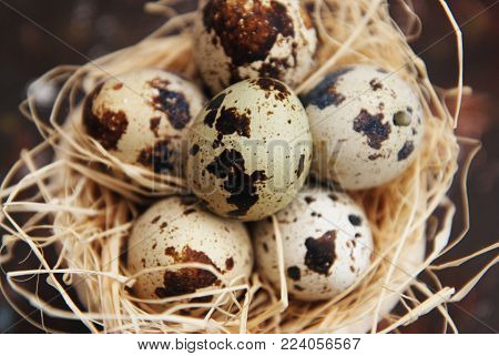 Close up Quail Eggs in Nest. Easter Decorations