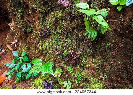 Little Sprout and moss grow up on the wet soil at ground inside the Tropical Forest in Thailand