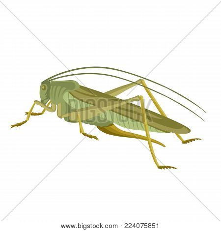 grasshopper  green  vector illustration flat style  profile  side
