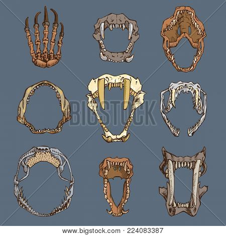 Animals portrait vector heads of roaring animals angry lion bear and aggressive wolf with teeth in open mouth illustration set of animalistic beast isolated on white background.