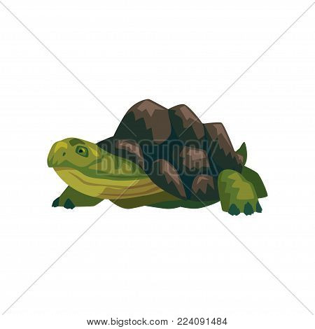 Sea turtle, water reptile cartoon vector Illustration on a white background