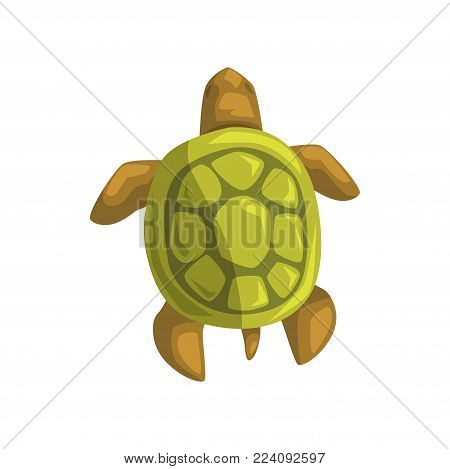 Sea turtle, reptile, view from above cartoon vector Illustration on a white background