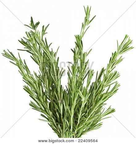 Fresh Rosemary  isolated