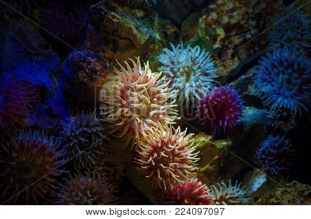 Coral in the sea with colorful colors
