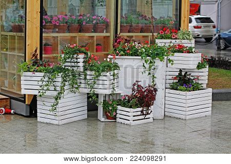 Pansies, geranium, petunias and loaches in a wooden pot