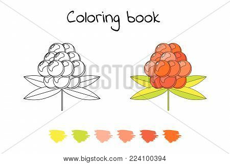 Coloring book for children. vector illustration. cloudberry