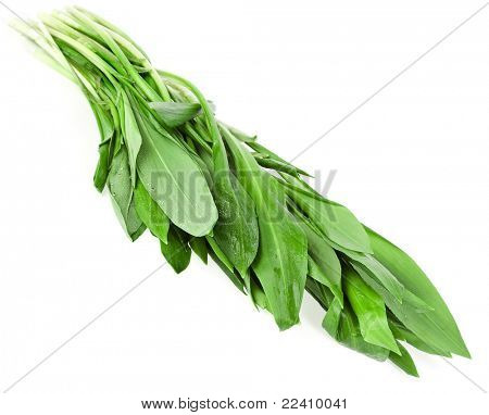 Ramson bunch isolated on white background