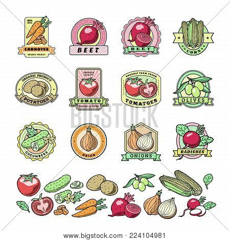 Vegetables logo vector healthy vegetably logotype tomato and carrot for vegetarians organic food in grocery shop illustration vegetated badges set isolated on white background.
