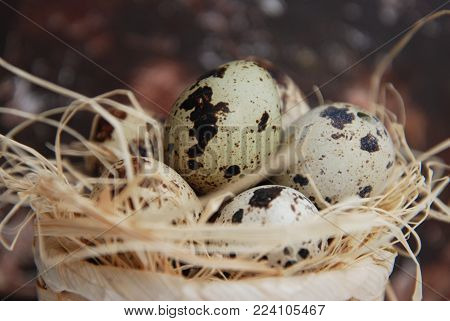 Easter Quail Eggs in Nest. Rusty Metalic Background with Copy Paste