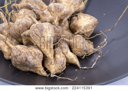Yam Bean or Jicama unpeeled - scientific name is Pachyrhizus erosus (L.) Urb.