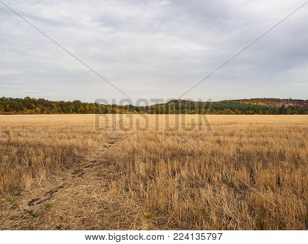 Horizontal views of a field with stubble, autumn landscape with forest on skyline and dramatic sky. Nature, rural view of farmland and plants in the beautiful surroundings.