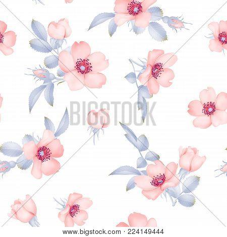 Dog-rose blooms. pink wild rose vector seamless pattern