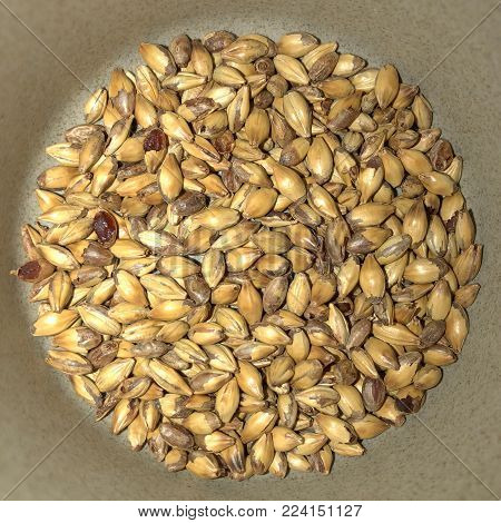 Toasted wheat berries with kernels. Straight above view of toasted wheat berries in the bottom of a bowl. Healthy, tasty, organic, natural grain snack.