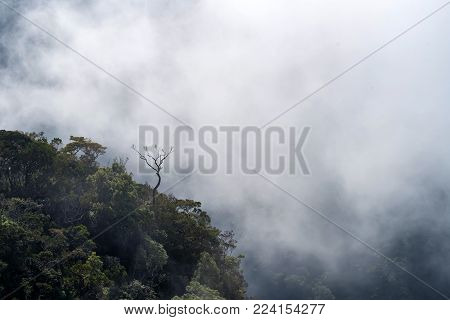 Beautiful foggy landscape viewed from the edge of famous sheer cliff World's End in Horton Plains National Park, Sri Lanka