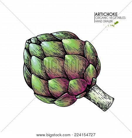 Vector hand drawn set of farm vegetables. Isolated artichoke. Engraved colored art. Organic sketched vegetarian objects. Use for restaurant, menu, grocery, market, store, party.